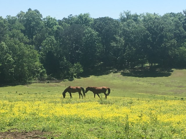 Two horses grazing in a field