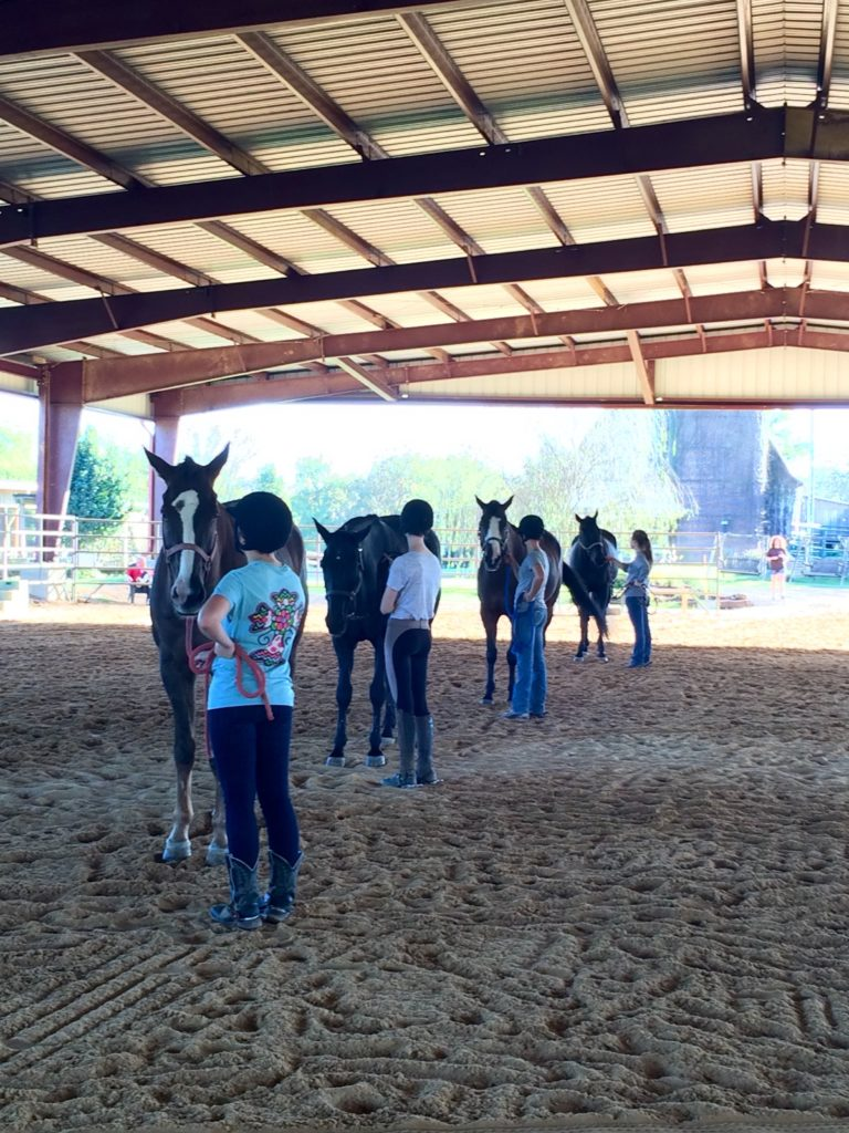 youth holding horses in an arena