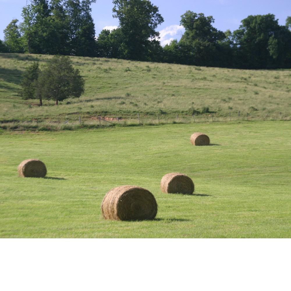Round bales in pasture
